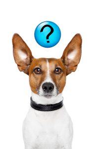 ask-the-dog