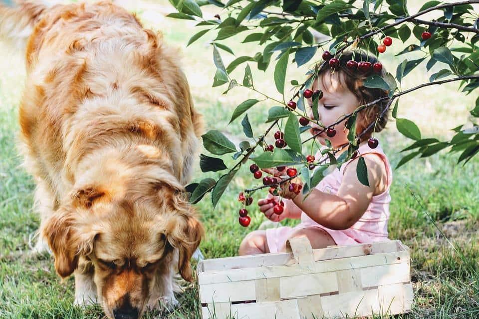 dog and girl under cherry tree