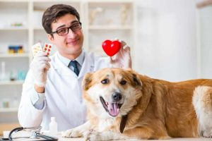 doctor-examining-golden-retriever-dog-in-vet-clinic