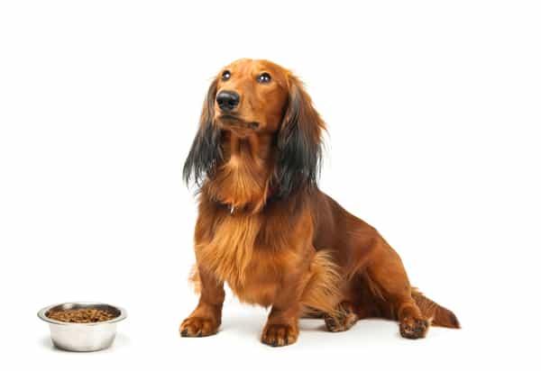 dog-and-food