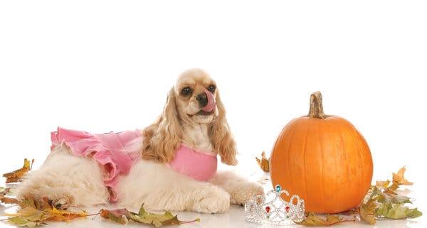dog-and-pumpkin-diet
