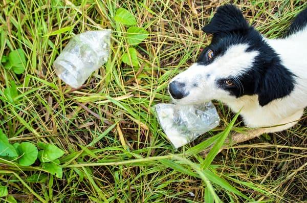 dog-eating-food-in-plastic-bag