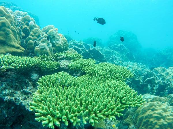 sea_corals