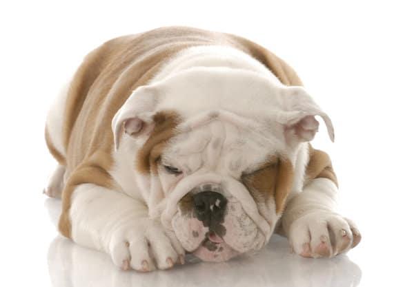 sick-puppy